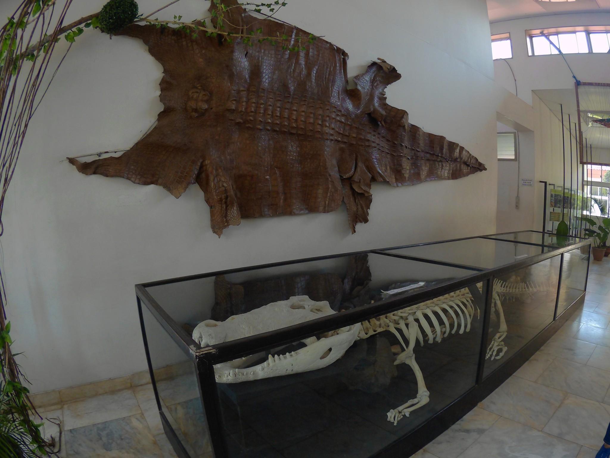 An Ex-Situ Adventure: Palawan Crocodile Farm